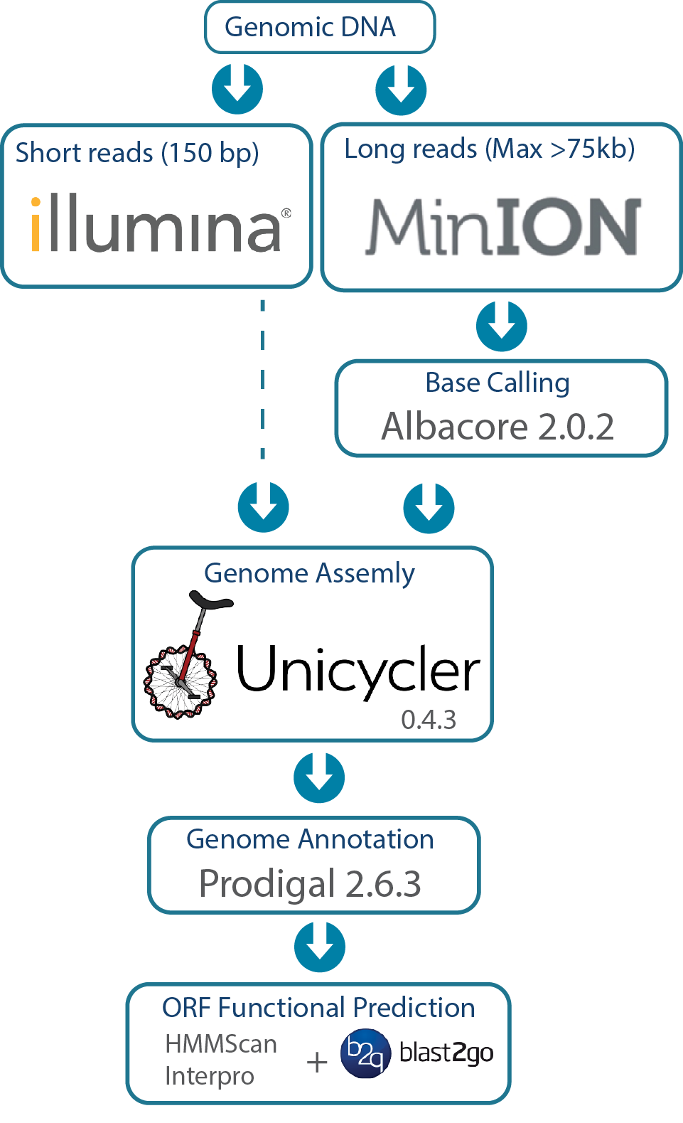 FusoPortal genome assembly and annotation work flow
